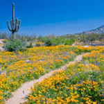 7 Tips to Get Your Home Ready to Sell This Spring in Scottsdale